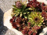 Číst dál: Kamenné nádoby pro květiny